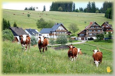 Haus Janz - Ferienwohnung